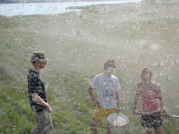 Нашествие комаров в Висконсине